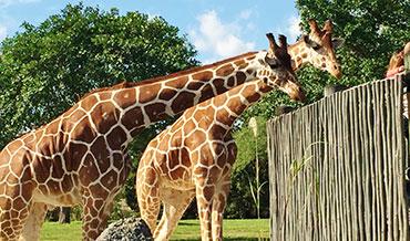 Miami Zoo (Round Trip)