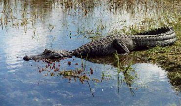 Everglades aprox 4hs. (Round Trip)